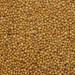 Nasiona gorczycy